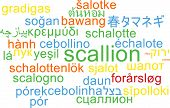 pic of scallion  - Background concept wordcloud multilanguage international many language illustration of scallion - JPG