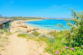 picture of shoreline  - flowers and plants by Capo Testa shoreline Sardinia - JPG