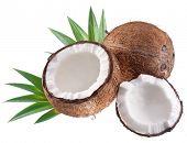 Постер, плакат: Высокое качество фотографий кокосы на белом фоне