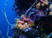 stock photo of coral reefs  - view of coral reef underwater oceanic aquatic life - JPG