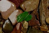image of safe haven  - two leaves caught on river rock - JPG