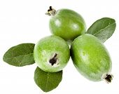 Pineapple Guava. Feijoa sellowiana