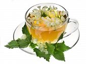 stock photo of flogging  - Herbal tea with flowers nettle on white background - JPG