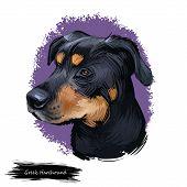 Greek Harehound, Hellenikos Ichnilatis, Hellenic Hound, Greek Hound Dog Digital Illustration Isolate poster