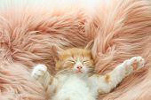 Cute Little Kitten Sleeping On Pink Furry Blanket, Above View poster