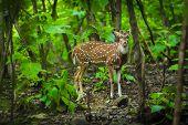 Deer Antelope In The Gujarat Jungle Look At Me poster