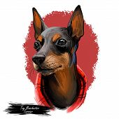 Toy Manchester Terrier Dog Breed Portrait Isolated On White. Digital Art Illustration, Animal Waterc poster