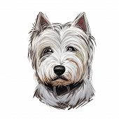 West Highland White Terrier Or Westie Dog Breed Portrait Isolated On White. Digital Art Illustration poster