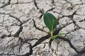 Tree Growing On Cracked Ground. Crack Dried Soil In Drought, Affected Of Global Warming Made Climate poster