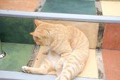 Orange Cat Tabby Feline Lying Resting Relaxing On Stairs Stairstep poster
