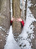 Male Hands Hold Bark Of Tree Trunk. Rough Tree Bark With Snow,  Leaves Forest In Background poster