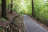 Footpath In The Autumn Park. Picturesque Landscape With Trees And Fallen Leaves In Early Fall Season poster
