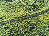 Aerial View Of A Country Road In The Forest With Moving Cars. Beautiful Landscape. Captured From Abo poster