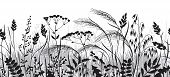 Seamless Horizontal Border Made With Monochrome Wild Plants. Black And Grey Silhouette Meadow Grass  poster
