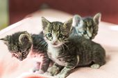 Three Little Kittens Play On The Bed. Domestic Cats In A Shelter. No One Needs Cats. Breeding Cats F poster