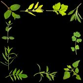 pic of hyssop  - Herb leaf selection forming an abstract frame over black background - JPG