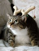 foto of sad christmas  - A fat tabby cat wearing Christmas antlers - JPG