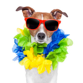 picture of loco  - crazy silly brazilian dog with red sunglasses and flower chain - JPG