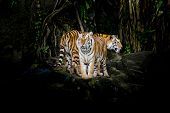 foto of sundarbans  - beautiful close - JPG