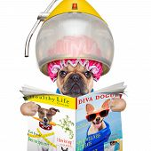 stock photo of hoods  - french bulldog dog under the hood dryer drying hair reading a newspaper or magazine isolated on white background - JPG