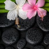 stock photo of hibiscus  - spa concept of zen basalt stones white pink hibiscus flower and natural bamboo with drops closeup - JPG