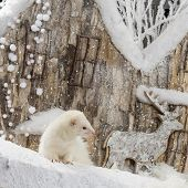 foto of ferrets  - Ferret in front of a Christmas scenery - JPG