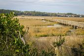 picture of inlet  - Atlantic coastal wetlands and boardwalk at low tide - JPG