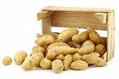 picture of solanum tuberosum  - original french  - JPG