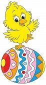 picture of baby chick  - Little yellow chick on a colorfully painted egg - JPG