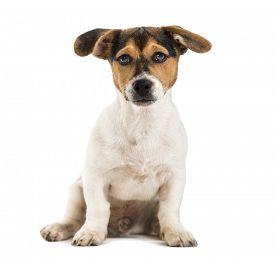 pic of saddening  - Crossbreed dog - JPG