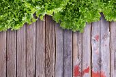 picture of leafy  - Overhead border view of clean leafy lettuces on wooden market table with copy space - JPG