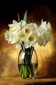 picture of white flower  - White flowers in a vase - JPG
