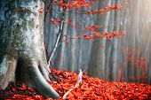 Autumn landscape, Fall scene. Beautiful Autumnal park with colorful bright red leaves and old trees. poster