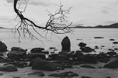 Deserted Beach In Hobart, Tasmania With Rocks In The Foreground On An Overcast Day, Black And White poster