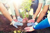 volunteering, charity, people and ecology concept - group of volunteers hands planting tree seedling poster