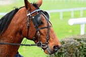 stock photo of blinders  - Horse Racing after the raceequestrian sport outdoor - JPG