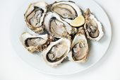 Fresh oysters. Raw fresh oysters are on white round plate, image isolated, with soft focus. Restaura poster