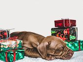 Young, Charming Puppy And A Festive Box poster