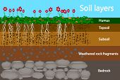 Soil Layers. Diagram For Layer Of Soil. Soil Layer Scheme With Grass And Roots, Earth Texture And St poster