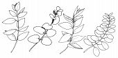 Vector Eucalyptus Leaves Branch. Black And White Engraved Ink Art. Isolated Branches Illustration El poster