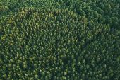 Aerial View Of Green Forest Landscape. Top View From High Attitude In Summer Evening. Natural Backdr poster