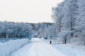 Snowy Road In Winter, Frosted Trees, Winter Frost. Winter Tide, Winter Time - Image poster