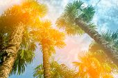 Palm Trees At Tropical Coast, Vintage Toned And Stylized, Toning poster