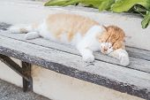 Relaxing Red Cat, Funny Sleeping Cat.red Tabby Cat Sleeping On A Wooden Bench.portrait Of A Sleeping poster