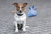 picture of sabbatical  - homeless dog holding a bag with a stick - JPG