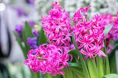Colorful Flower. Flower In Garden At Sunny Summer Or Spring Day. Flower For Postcard Beauty Decorati poster