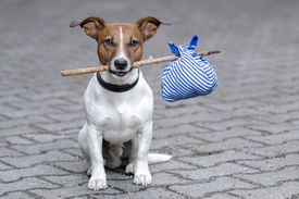 stock photo of sabbatical  - homeless dog holding a bag with a stick - JPG