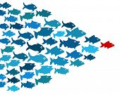 stock photo of blue animal  - Fishes in group leadership concept - JPG