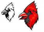 pic of cardinal-bird  - Red cardinal bird head in cartoon style - JPG