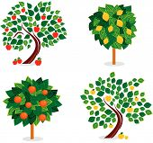 picture of apple tree  - four trees with different fuits like apples - JPG